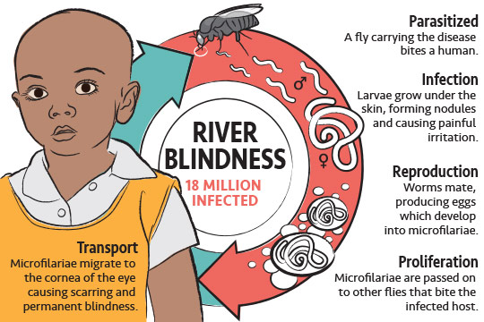 riverblindness_life_cycle